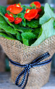 13 best rap ideas images on pinterest potted plants gifts and