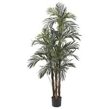 robellini palm tree in pot reviews joss