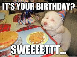 Happy Birthday Meme Dog - sweet birthday funny happy birthday meme