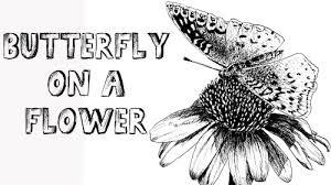 class butterfly on a flower pni paint basket tv