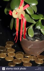 feng shui coins on money tree with gold coins symbolising success