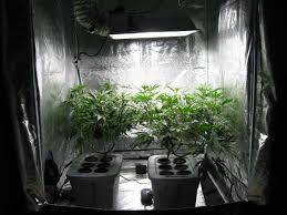 13 things i wish i u0027d known before i started growing grow weed easy