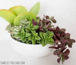17 easy diy indoor succulent planter ideas to beautify your home