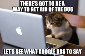 Working Cat Meme - working cat memes imgflip