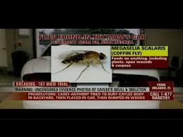 Flies In Backyard Hln Coffin Flies Found In Anthony U0027s Trunk Youtube