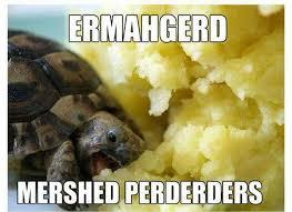 Tortoise Meme - 11 best tortoise memes images on pinterest funny animals funny