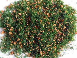 cm3models fruit tree scatter orange 30g bag