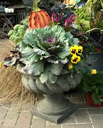 Plant Combination Ideas For Container Gardens - grow a 1 fall container garden on a 99 gardener budget treehugger
