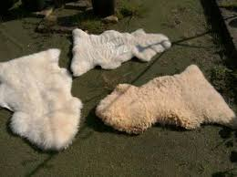 Sheepskin Rug Cleaning Second Hand Sheepskin Rugs Local Classifieds Buy And Sell In