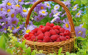 39 hd flowers basket wallpapers download free bsnscb com