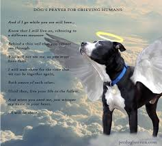 grieving loss of pet coping with the loss of a pet pets and animals