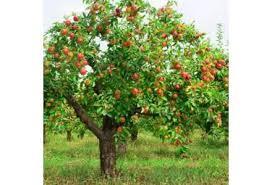 backyard fruit tree basics oath keepers