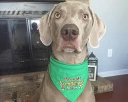 mardi gras jester ribbon dog mardi gras bead dog etsy