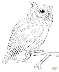 southern white faced owl coloring page free printable coloring pages