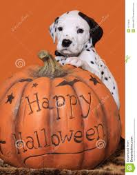 halloween background puppys halloween puppy royalty free stock image image 15772656