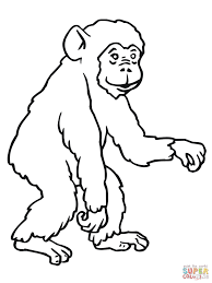 chimpanzee coloring page chimpanzee coloring pages free coloring