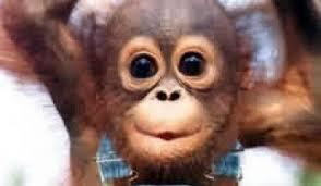 Funny Monkey Meme - funny monkey birthday memes daily funny memes