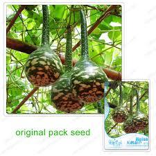get cheap ornamental gourd aliexpress alibaba