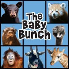 21 best zoo news u0026 events images on pinterest zoos birmingham