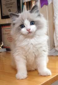 impossibly cute furball 18th february 2014 cat beautiful