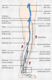 Foot Vascular Anatomy Diagram Showing The Venous Anatomy Of The Leg For Best Nursing