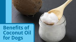 Dog Hair Loss On Back Is Coconut Oil Good For Dogs Petmd