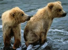 brown bear species wwf