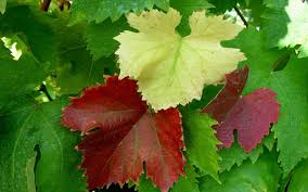 leaf jigsaw puzzles android apps on google play
