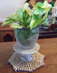 interior design exciting glass potted plant for golden pothos