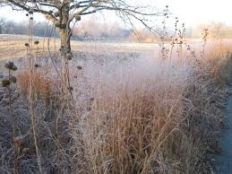 winter prairie dyck arboretum