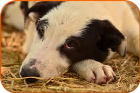 animali da cortile in regalo annunci biella piemonte di animali da cortile in regalo cuccioli