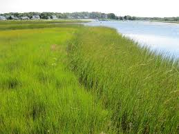 The Marsh Restaurant Cape Cod - depression era drainage ditches emerge as sleeping threat to cape