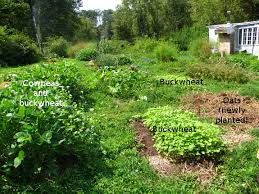 fitting cover crops into the garden ecosystem