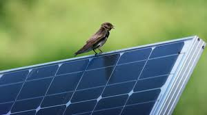 how to go solar it s time to go solar audubon