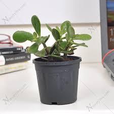 best plant for desk office feng shui plants office feng shui plants best plant for my