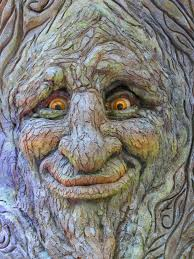 tree face tree face stock image image of face funny bellagio 34969537
