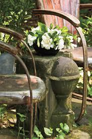 using georgia native plants hummingbird favorites in my garden southern gardening charleston u0027s 5 iconic plants southern living