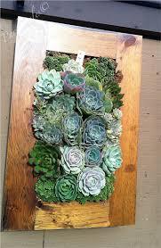 85 best succulent walls images on pinterest succulents garden