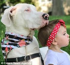 Blind Great Dane Toddler Has An Adorable Bond With Her Deaf Great Dane Daily Mail
