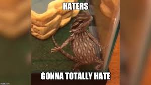 Haters Gonna Hate Meme Generator - haters gonna hate lizard memes imgflip