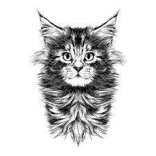 cat face sketch vector stock vector image 91503216