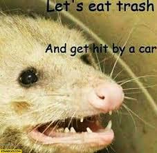 Rat Meme - let s eat trash and get hit by a car rat meme starecat com