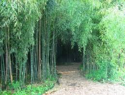 New Jersey Forest images Bamboo forest rutgers garden new brunswick nj new jersey jpg