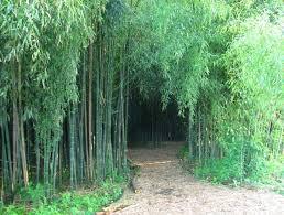 New Jersey Forest images Bamboo forest rutgers garden new brunswick nj new jersey jpg