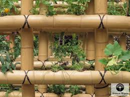 Urban Vegetable Garden by Urban Agriculture An Urban Vegetable Garden In Bamboo
