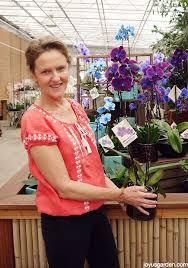 How To Care For Your by How To Care For Your Beautiful Phalaenopsis Orchid