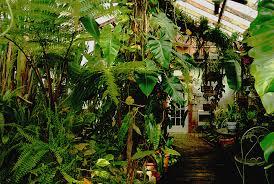 Tropical Plants Pictures - build your own tropical rain forest exotic rainforest rare