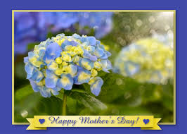 Mother S Day 2017 Flowers by Mothers Day Flower Cards U2013 Art Photo Web Studio