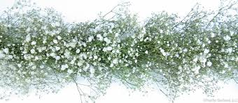 babys breath fresh premium baby s breath garland for weddings by pacific
