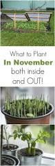 41 best planting the garden images on pinterest gardening